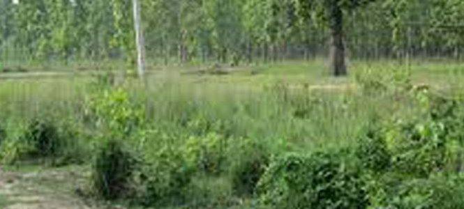दिगो वन व्यवस्थापनले समृद्ध बनाउने योजना